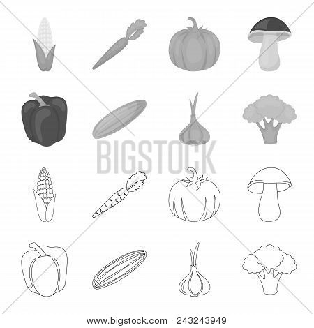 Red Sweet Pepper, Green Cucumber, Garlic, Cabbage. Vegetables Set Collection Icons In Outline, Monoc