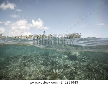 Split Half And Half View Of Giant Clams Under Water At Clam Sanctuary And Reserve, Upolu Island, Wes