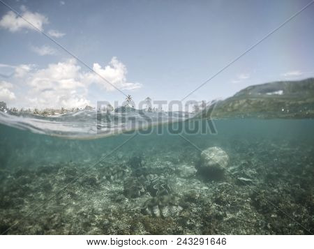 Split half and half view with waves of giant clams under water at clam sanctuary and reserve, Upolu Island, Western Samoa, South Pacific poster