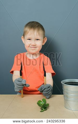 European Blond Baby Boy In Orange T-shirt Plants A Crassula Ovata Plant In Metal Pot, Concept Of Inv