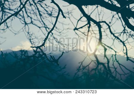 Mystical Trees Brunches Silhouettes On The Sky Background. Photo Depicting A Creepy Gnarled Tree Woo