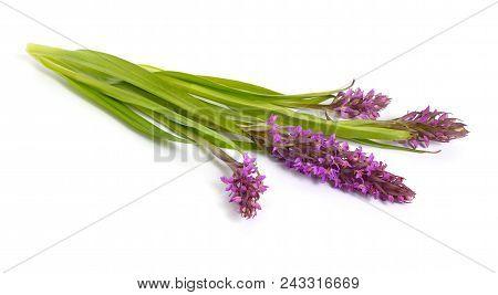 Dactylorhiza Majalis, Western Marsh Orchid, Broad-leaved Marsh Orchid, Fan Orchid, Common Marsh Orch