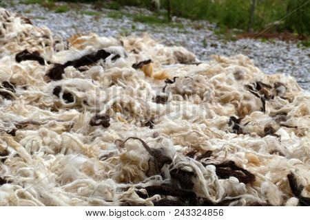 Sheep Wool, Sheep Wool For Making Beds And Quilts,washed Sheep Wool Are Dried.