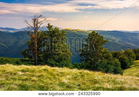 Beech Forest On A Meadow Of Svydovets Ridge. Beautiful Landscape Of Carpathian Mountains In Late Sum