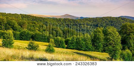 Panorama Of Forested Carpathian Mountains. Beech Forest On The Grassy Meadow And Mountain Peak In Th