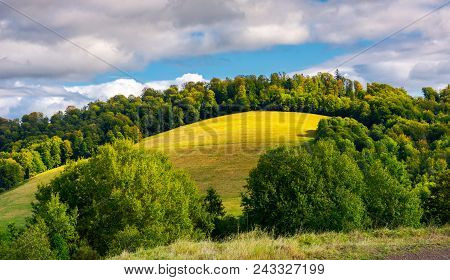 Grassy Meadow On A Forested Hill. Lovely Nature Scenery Under The Cloudy Sky