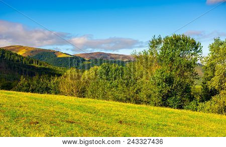 Forest On A Grassy Hills Of Carpathian Mountains. Lovely Autumn Landscape On A Bright Day Under The