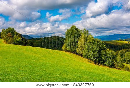 Beautiful Grassy Meadow On Hillside In Mountains. Row Of Trees On The Edge Of A Hill Under The Gorge