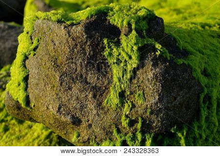 Lush green carpet of moss. Moss on the rocks.