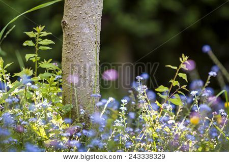 Close-up of beautiful tender wild blue and yellow small flowers lit by summer sun lavishly blooming under tree trunk on blurred dark green bokeh background. Beauty and harmony of nature concept. poster