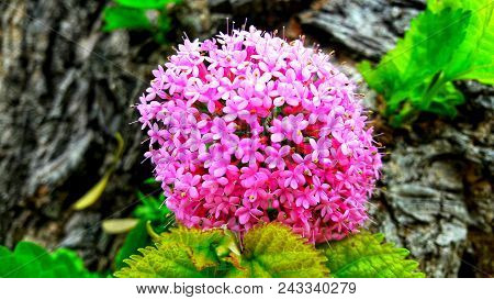Spanish mountains and their flora.Lilac flowers in spring garden.Flower summer background of blooming spring lilac flowers. Spring flower landscape.