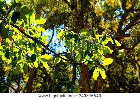 Branches Of Trees With . Tree Branches On The Tree Against Blue Sky. Landscape Spain.green Spring Le
