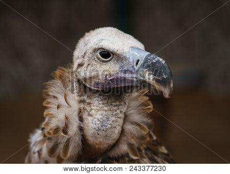 Wild Life. Vulture . Portraiture. Wild Life. Vulture . Portraiture.