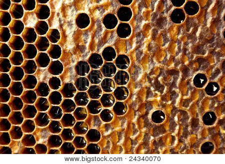 Honeycomb filled with honey poster