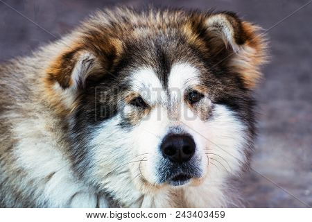 Portrait Of A Big Dog Mongrel Closeup