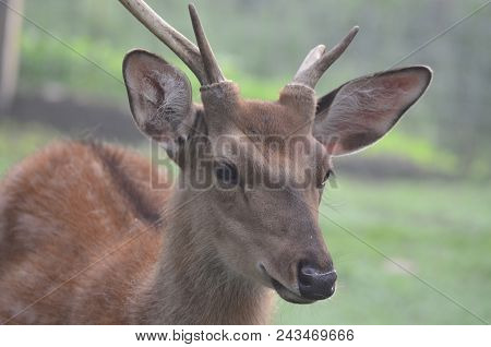 Wild Forest Animals, Captive, Southern Bohemia, Czech Republic