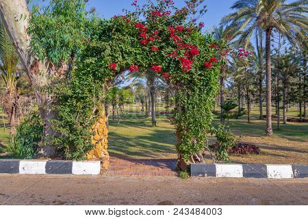 Natural Rose Garden Arch Covered With Climbing Plants At Montazah Public Park, Alexandria, Egypt