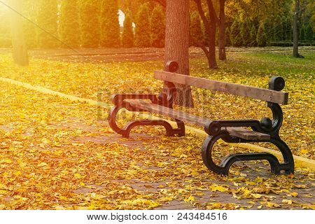 Empty Bench In The Autumnal Park On Background Of Yellow Fallen Leaves And Avenues With Trees And Th