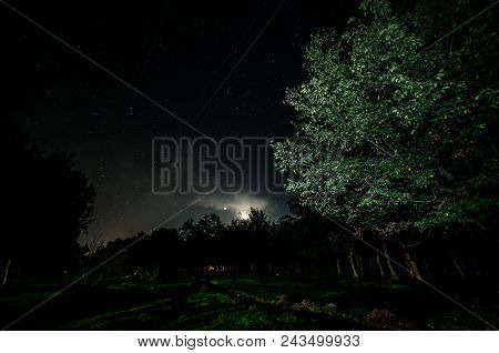 Landscape Oh Night Forest With Green Meadow In Bright Starry Night Or View Of Milky Way In The
