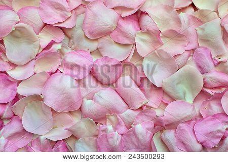 Rose Petals, Abstract Background Of Delicate Pink Rose Petals Petals.