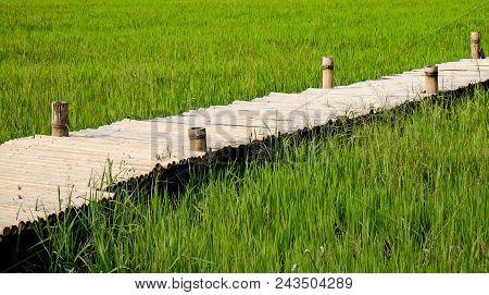 Green Grass Background, Green Grass Texture, Bamboo Walkway.