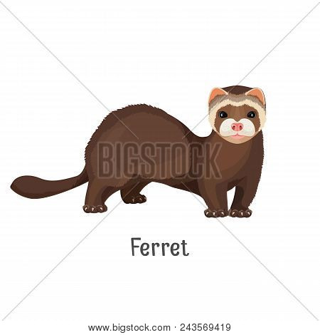 Ferret Domesticated Form Of European Polecat, Cute Friendly Animal Vector Illustration Isolated On W
