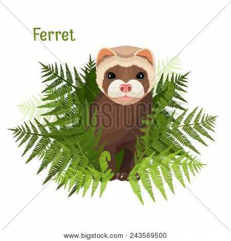 Ferret In Green Leaves Of Fern, Polecat Cute Friendly Animal Vector Illustration Isolated On White.