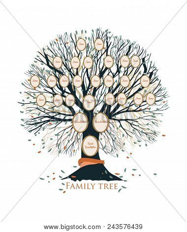 Family Tree Or Genealogical Chart Template With Branches And Round Portrait Frames Isolated On White