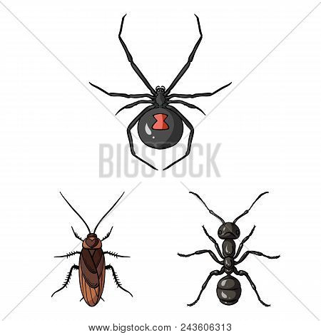 Different Kinds Of Insects Cartoon Icons In Set Collection For Design. Insect Arthropod Vector Symbo