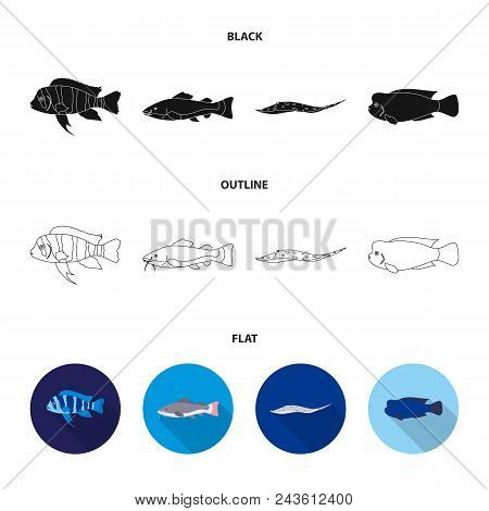 Frontosa, Cichlid, Phractocephalus Hemioliopterus.fish Set Collection Icons In Black, Flat, Outline