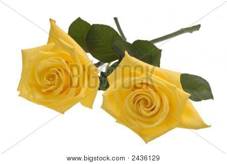 Two Yellow Roses Cutout