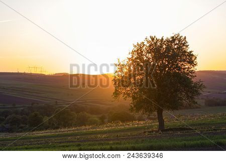 Quiet And Peaceful View Of Beautiful Big Green Tree At Sunset Growing Alone In Spring Field On Dista