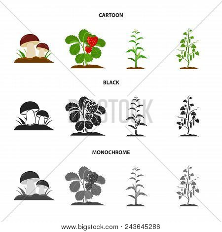 Mushrooms, Strawberries, Corn, Cucumber.plant Set Collection Icons In Cartoon, Black, Monochrome Sty