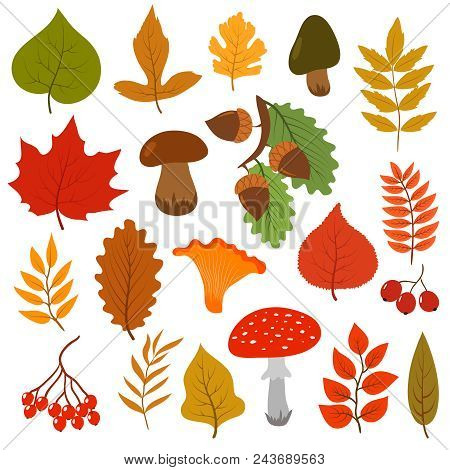 Yellow Autumn Leaves, Mushrooms And Berries. Fall Forest Elements Vector Cartoon Collection Isolated