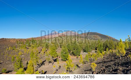 Beautiful Panoramic View Of The Pico Del Teide And Pico Viejo. Conifer Forest And Lava Flows On The