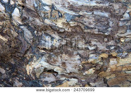 birch bark texture - natural background