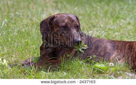 Shot of the dog in the garden - romantic dog poster