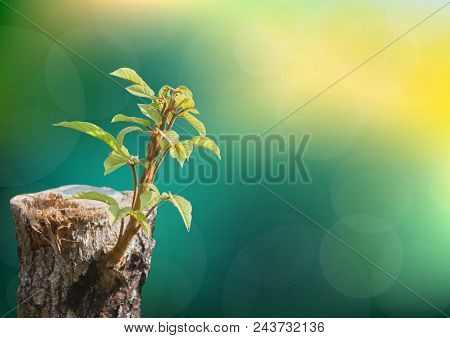 Young Tree Seedling Grow From Stump, Beginning New Life And Rebirth Concept.