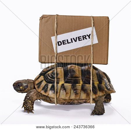 Slow delivery on turtle.