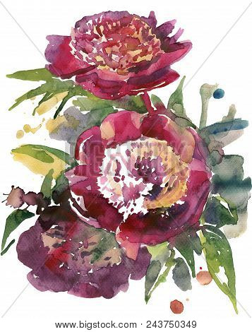 59/5000 Pyshnyye Tsvety Bordovykh Pionov S Sochnoy Listvoy Na Belom Fone Lush Flowers Burgundy Peoni