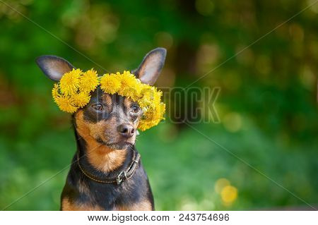 Сute Puppy, A Dog In A Wreath Of Spring Flowers On A Natural Background Of A Green Forest, A Portrai