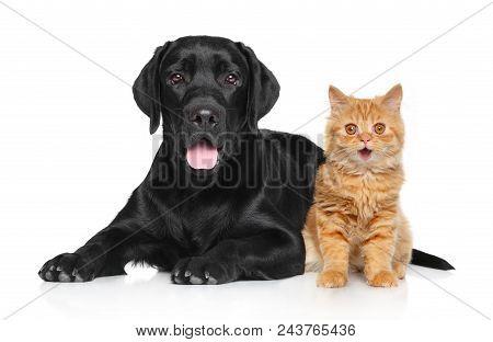 Happy Cat And Dog