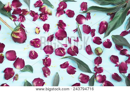 Petals Of Flowers On A Turquoise Background. A Pattern Of Petals, Buds And Leaves Of Pions On A Brig