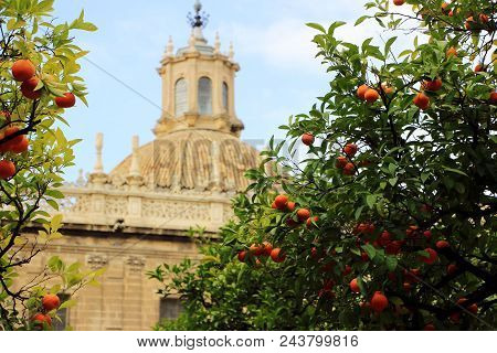 Seville Cathedral And Orange Tree, A Symbol Of Seville And Spain.