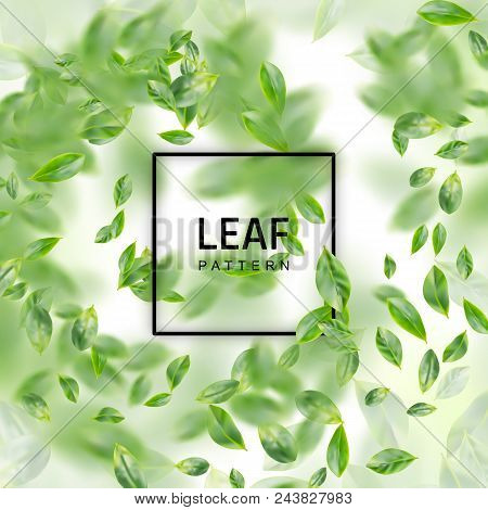 Green Leaf  Realistic 3d Background. Creative Lush Greenery Summer Pattern With Ficus Leaves Or Tea