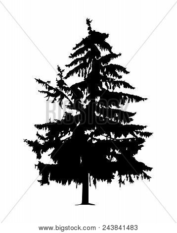 Silhouette Of Pine Radioactive Affected Tree Near Chernobyl Area In Ukraine.