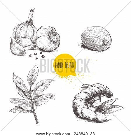 Hand Drawn Sketch Spices Set. Garlic Composition With Black Pepper Seeds, Ginger Root, Bay Leaves Br