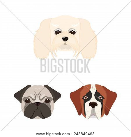 Dog Breeds Cartoon Icons In Set Collection For Design.muzzle Of A Dog Vector Symbol Stock  Illustrat