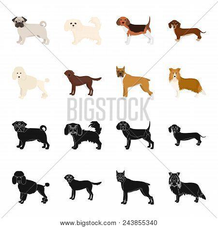 Dog Breeds Black, Cartoon Icons In Set Collection For Design.dog Pet Vector Symbol Stock  Illustrati