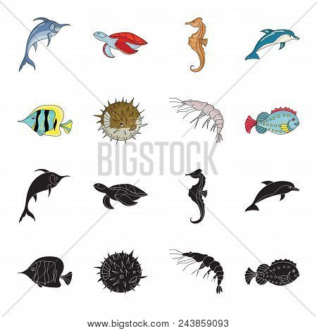 Shrimp, Fish, Hedgehog And Other Species.sea Animals Set Collection Icons In Black, Cartoon Style Ve